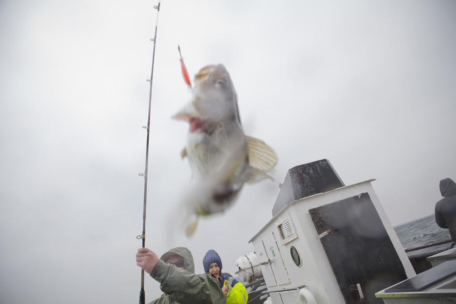 fiskinarbild2